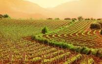Aiuti per gli investimenti nel settore del vino