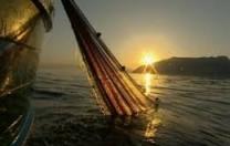 Avviso per il sostegno alle imprese della pesca e dell'acquacoltura emergenza Covid-19
